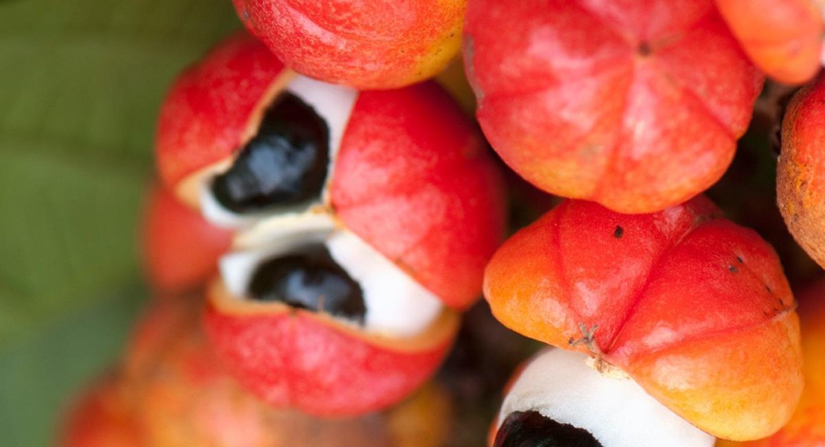 Γκουαρανά, το τονωτικό που χρειάζεται προσοχή στη χρήση