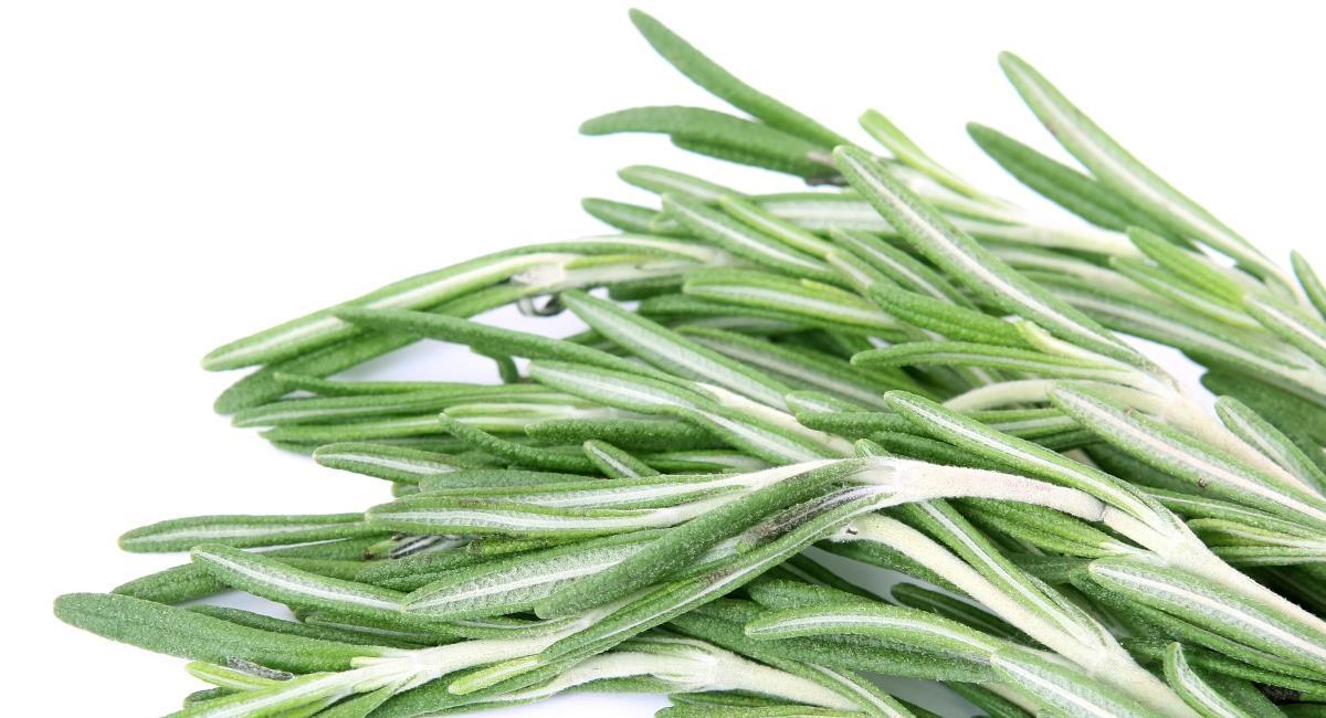 Δεντρολίβανο, το θεραπευτικό βότανο!